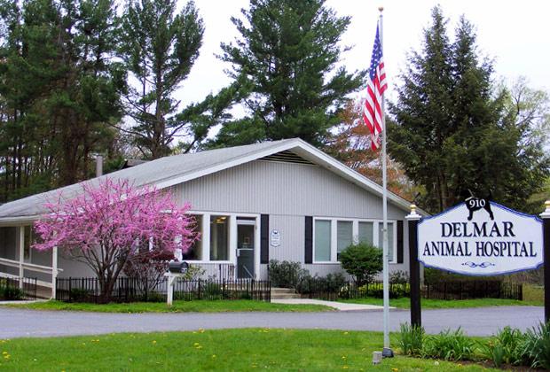 Delmar Animal Hospital Veterinarian Delmar Ny